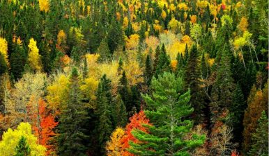 23 de noi arii naturale protejate din Romania vor fi incluse in reteaua ecologica europeana Natura 2000