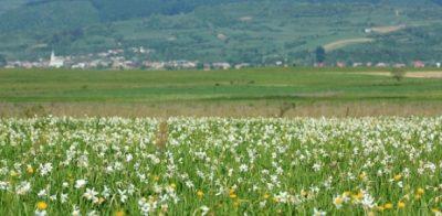 Anunt privind deschiderea apelului de selectie a proiectelor pentru masura M 3.1/1A – Conservarea, protectia si mentinerea biodiversitatii naturale a zonelor protejate