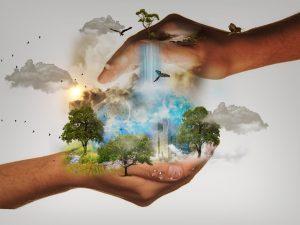 Burse pentru profesionistii interesati de conservarea naturii