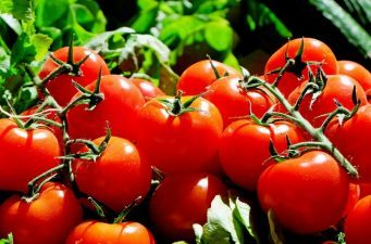 Primele rosii romanesti au ajuns in piete si hypermarketuri