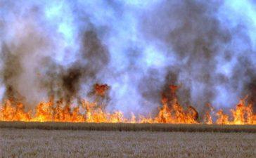 Arderea miristilor si a resturilor vegetale, sanctionate cu pierderea subventiilor