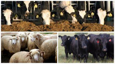 APIA incepe platile pentru asociatiile de crescatori de animale