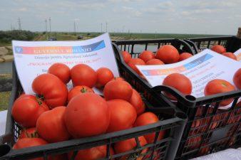MADR: Peste 50.000 tone de rosii proaspete au fost livrate pe piata de catre beneficiarii programului de tomate romanesti in 2017