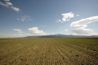 MADR: Plafoanele ANT pentru sectorul vegetal au fost aprobate