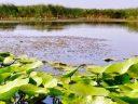 Unde a ajuns miliardul de euro de la UE pentru Delta Dunării?
