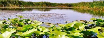 Tulcea: Proiectul privind modelarea hidraulica in Delta, respins la finantare