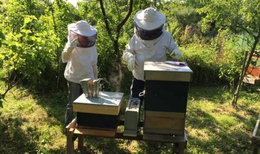 finantari-pentru-apicultori_0.jpg