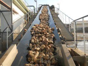 MADR a incheiat procedura de recunoastere a fabricilor de zahar