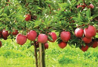 MADR: Sprijin financiar pentru producatorii agricoli din sectorul fructe