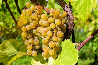 MADR: Sprijin european acordat sectorului vitivinicol in perioada 2019-2023
