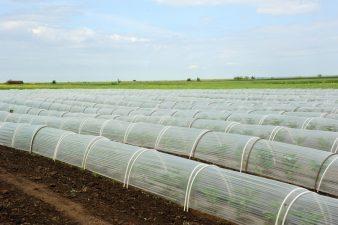 MADR: Beneficiarii din ciclul al doilea de productie al Programului de tomate vor primi banii cuveniti