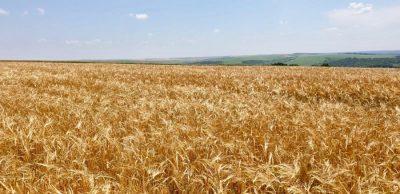 MADR: S-a dat startul campaniei de recoltat la orz și orzoaică