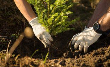 """APIA: în perioada 03 august 2020 – 11 decembrie 2020, se depun cererile de sprijin pentru accesarea schemei de ajutor de stat """"Sprijin pentru prima împădurire şi crearea de suprafeţe împădurite"""""""
