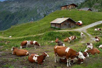 Fermierii din zona montană au la dispoziției 13 milioane de euro prin PNDR 2020 pentru abatoare de capacitate mică