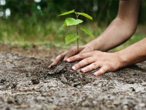 Guvernul a aprobat alocarea a peste 6,6 milioane lei pentru înființarea unor perdele forestiere de protecție a Autostrăzii A2 și DN 2B