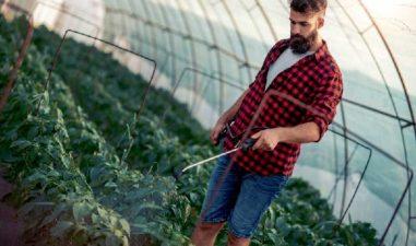 Sprijin pentru instalarea tinerilor fermieri