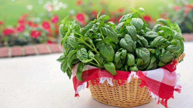 Cultivatorii de plante aromatice beneficiază anul acesta de o schemă de ajutor de minimis